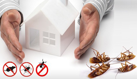 Building and Pest inspection Melbourne